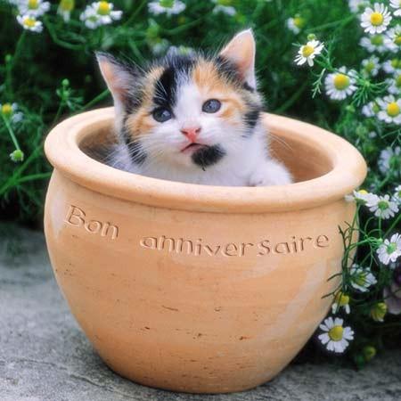 Happy Anniversaire Nos Voeux Les Plus Sinceres